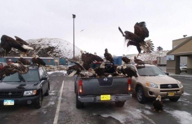 Unalaska - thị trấn chim đại bàng.