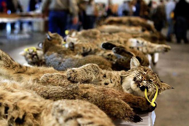 Một trong những tác hại lớn nhất của ngành công nghiệp lông thú là phá hủy môi trường.