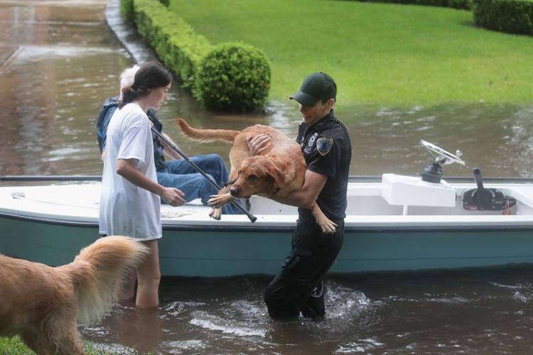 Tình nguyện viên và nhân viên cứu hộ ở các vùng lân cận đang nỗ lực cứu người dân và thú cưng của họ
