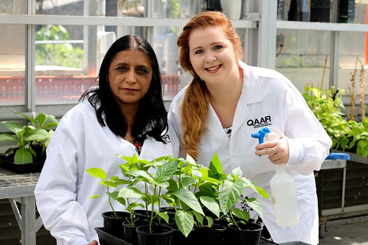 Nhóm nghiên cứu thuộc Đại học Queensland và thiết bị xịt BioClay.