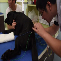 Chó mèo bị liệt được châm cứu điện ở Trung Quốc