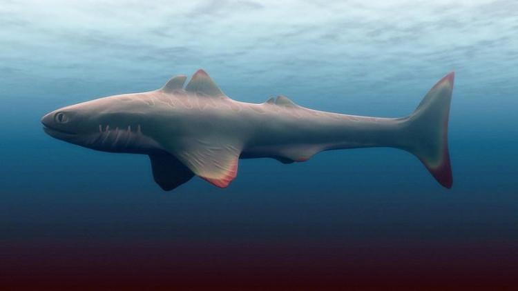 Hình ảnh phục dựng của cá mập Cladoselache.