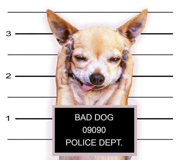 Mỗi thành viên trong tòa nhà sẽ phải đăng ký mẫu ADN của vật nuôi trước khi thuê hoặc dọn đến ở.