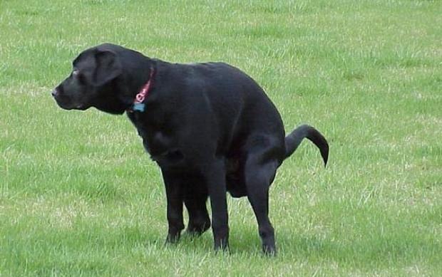 Khi dắt chó đi dạo, chủ nhân luôn phải mang theo bao đựng chất thải để xử lý bãi chiến trường.
