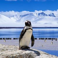 Nam Cực suy giảm đa dạng sinh học nghiêm trọng khi nước biển nóng lên