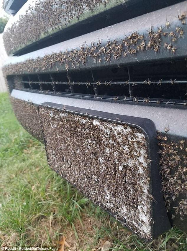 Việc phun thuốc diệt muỗi là điều cần phải thực hiện ở Texas để hạn chế dịch bệnh bùng phát.