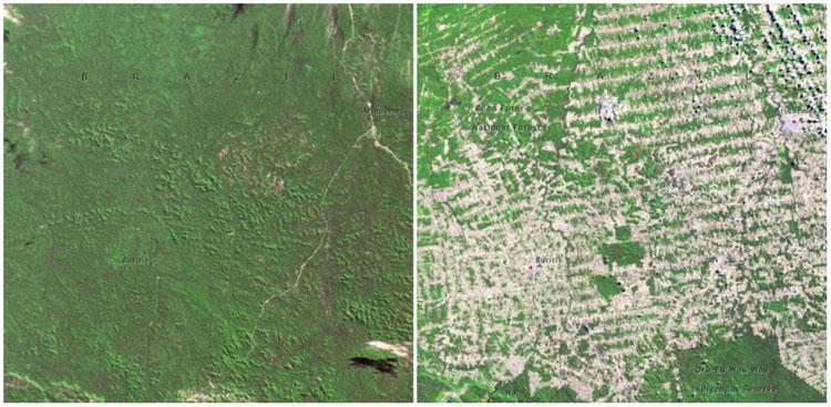 Rừng Rondonia, Brazil