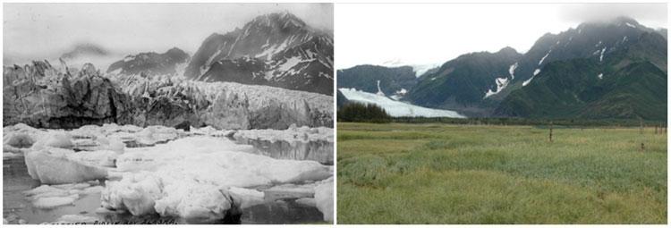 Sông băng Pedersen Glacier