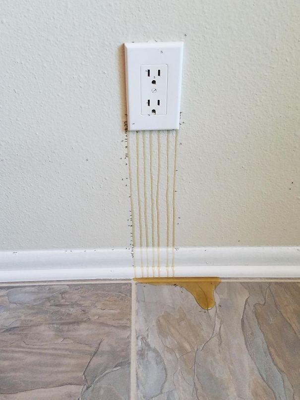 Lũ ong làm tổ... bên trong ổ điện và thứ đang chảy ra ngoài chính là mật ong