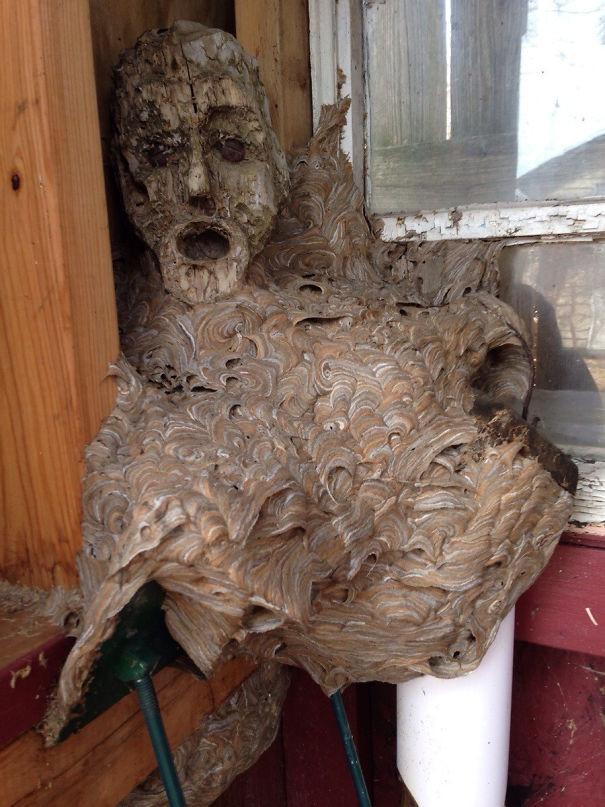 Bọn ong bắp cày học lỏm ong vò vẽ cực nhanh...