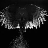 Những tác phẩm thắng giải Ảnh loài chim đẹp nhất 2017