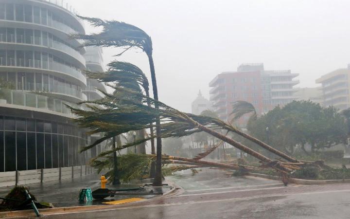 Cây bị đổ rạp ở bờ biển Miami, Florida, Mỹ vào ngày 10/9 khi bão Irma tiến vào đây