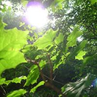 Điều gì sẽ xảy ra nếu có ngày bạn không còn nhìn thấy ánh sáng Mặt trời?