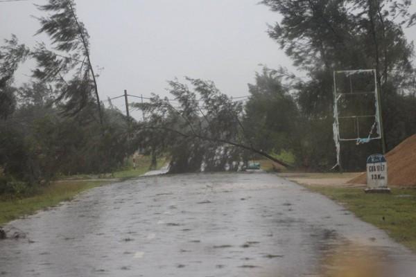 Một chiếc cây đổ chắn ngang đường đi