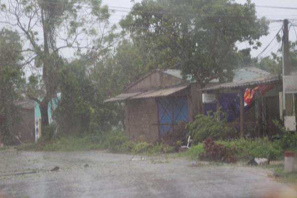 Cây cối tiêu điều do bão quét qua