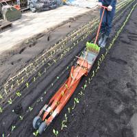 Video: Máy trồng rau gieo cả luống trong vài phút