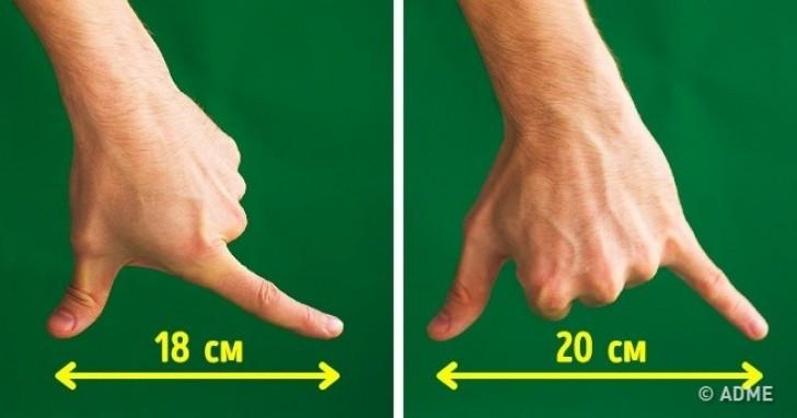 Khoảng cách trung bình giữa đầu ngón cái và ngón trỏ là 18cm, còn tới ngón út là 20cm.