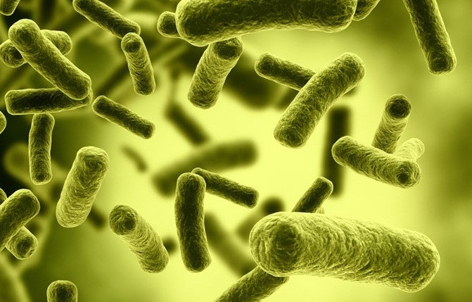 Các vi sinh vật còn được sử dụng để làm phân bón dùng trong nông nghiệp.