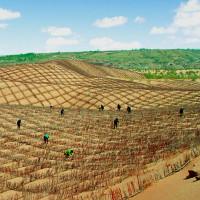 Video: Hỗn hợp giúp Trung Quốc biến sa mạc thành đất trồng