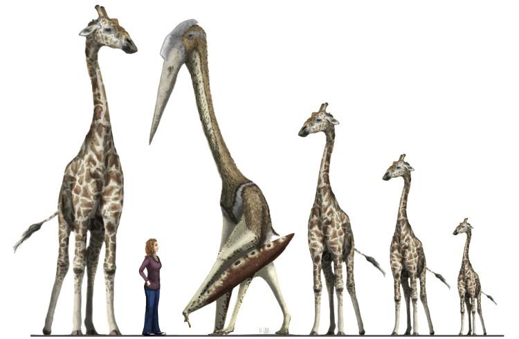 Kích thước của loài thằn lằn bay azhdarchid so với con người và hươu cao cổ.