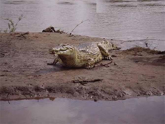 Một con cá sấu sông Nile khổng lồ đã cướp đi mạng sống của hàng trăm người tại Burundi, thuộc châu Phi.