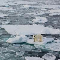 Đại tuyệt chủng trên toàn cầu có thể diễn ra năm 2100