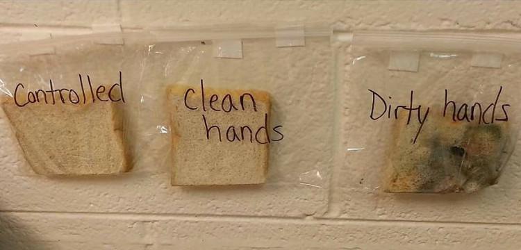 Thí nghiệm với 3 lát bánh mì.