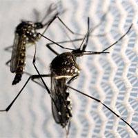 Đông Nam Á lo ngại sốt rét kháng thuốc