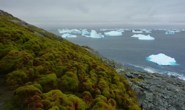 Hình ảnh một phần của Nam Cực hiện nay.