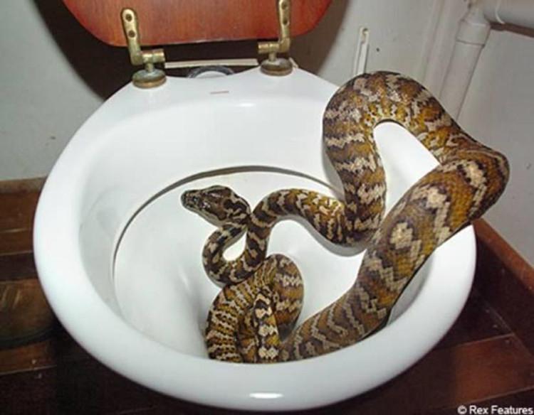 Bạn sẽ thấy sao khi mở cửa vào WC mà thấy cảnh này?