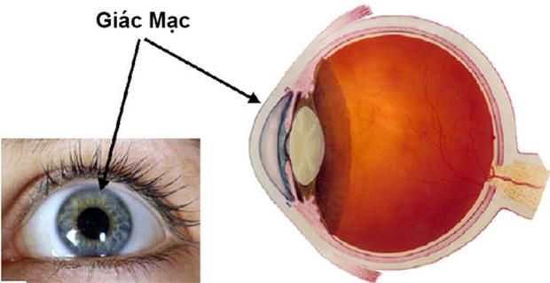 Giác mạc là lớp màng mỏng, trong suốt nằm ngoài cùng nhãn cầu
