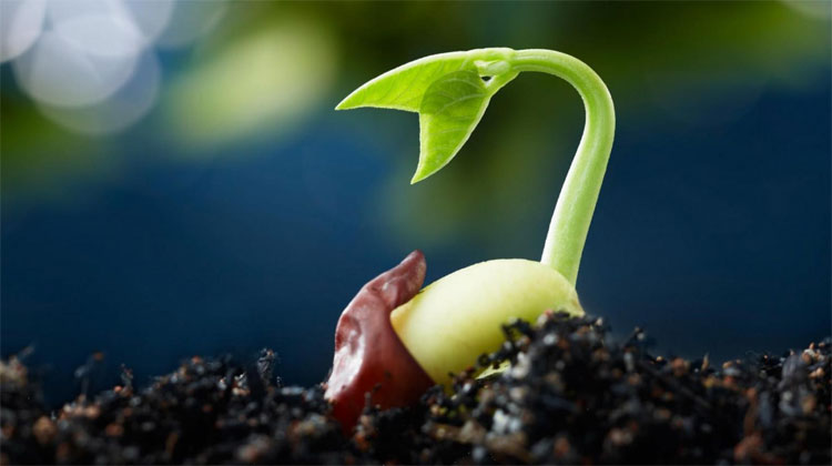 Các hạt giống được che chắn trong không gian có tỷ lệ nảy mầm hơn 60%.