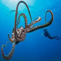 Video: Kỹ năng tự vệ bậc thầy của bạch tuộc