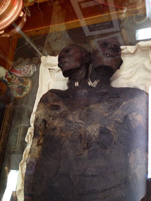 Thi thể người khổng lồ Kap Dwa được lưu giữ ở viện bảo tàng.