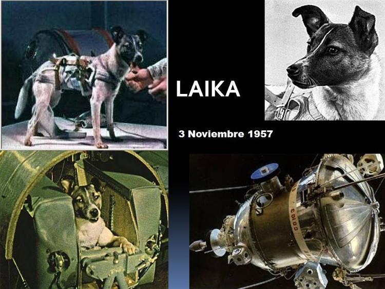 Chưa đầy một tháng sau khi Sputnik 1 ra mắt, Sputnik 2 được phóng lên cùng với chú chó Laika.