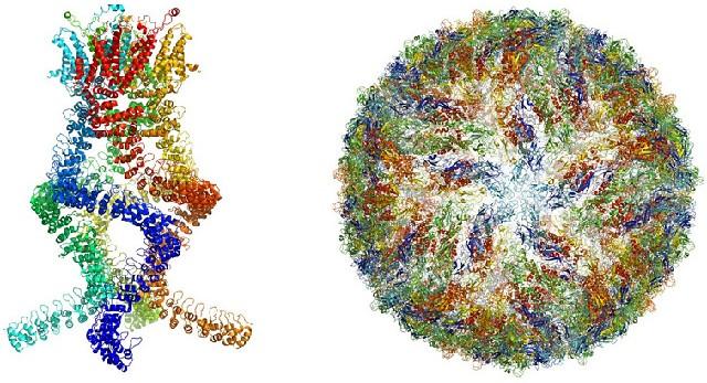 Cấu trúc nguyên tử của một số phức hợp protein.