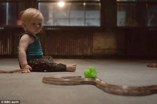 Em bé ngồi chơi đùa với rắn mà không hề tỏ ra sợ hãi chút nào.