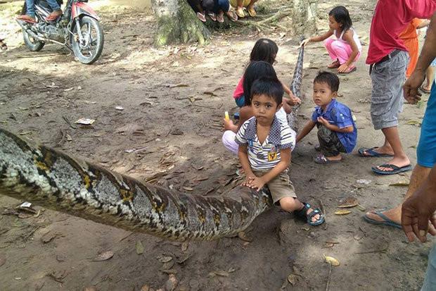 Trẻ em vui đùa bên xác trăn khổng lồ dài 7 mét.