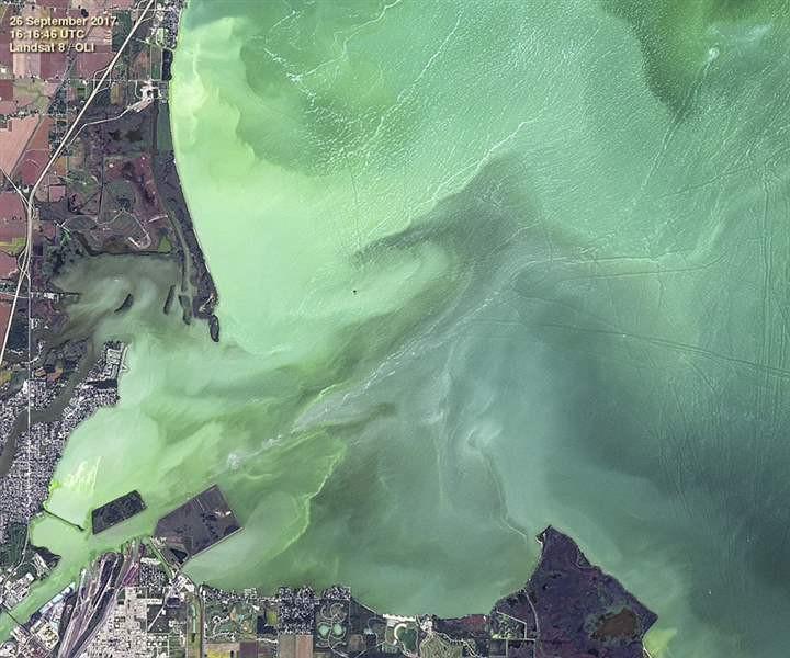 """Tác nhân gây nên sự đổi màu ấy chính là sự phát triển bùng nổ của """"tảo độc""""."""