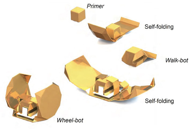 Các hình dạng của Primer khi biến hóa