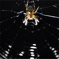 """Ghé thăm căn phòng """"ác mộng"""" nơi 10.000 con nhện chung sống"""