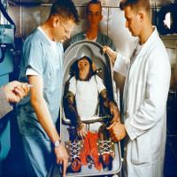 Số phận của những con tinh tinh và khỉ được NASA gửi lên vũ trụ