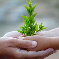 Cây xanh giúp lọc nước, giảm tỷ lệ tử vong ở trẻ do tiêu chảy