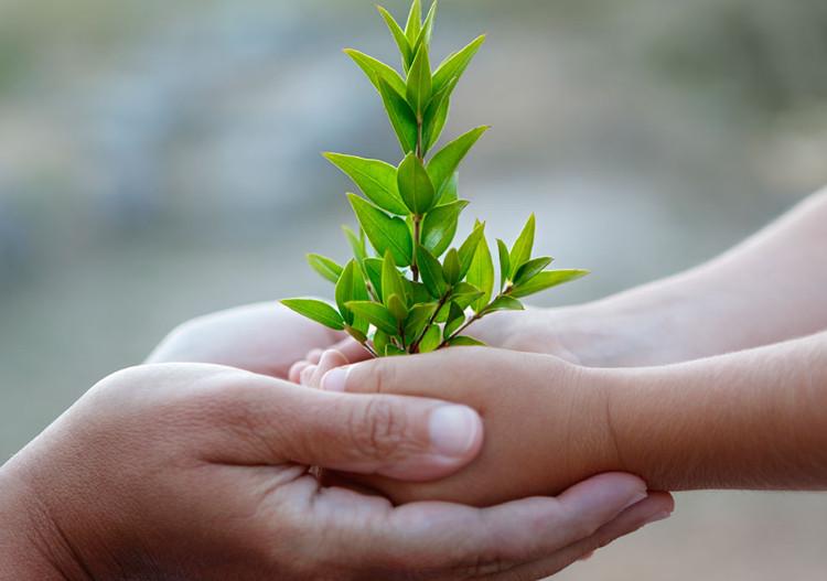 Nếu khu vực đầu nguồn nước có thêm nhiều cây xanh, trẻ khỏe mạnh hơn.