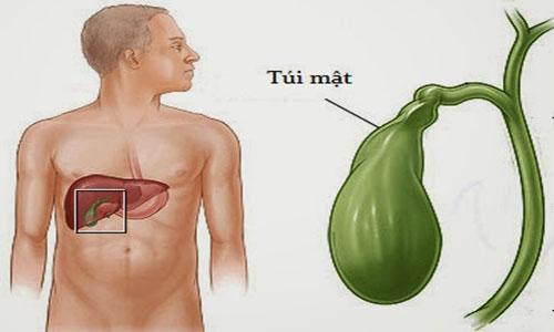 Túi mật tiết ra mật để phân hủy chất béo trong thức ăn.