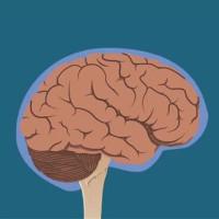 Đây là những gì xảy ra với não bộ khi bạn bị đập vào đầu