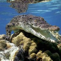 Video: Những động vật nguy hiểm nhất Australia