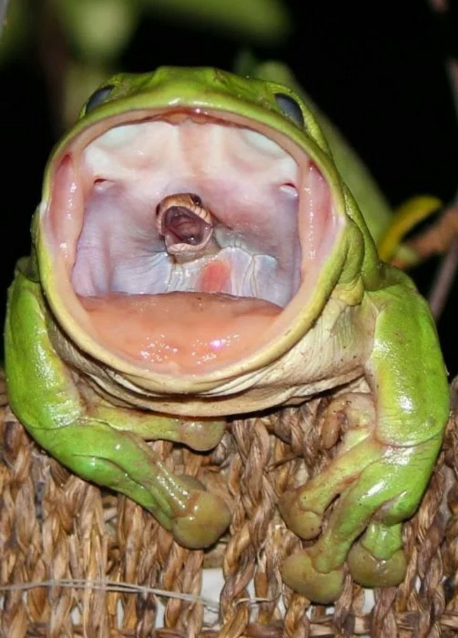 Bức ảnh gợi liên tưởng đến tiếng thét tuyệt vọng của con rắn sắp bị nuốt chửng.