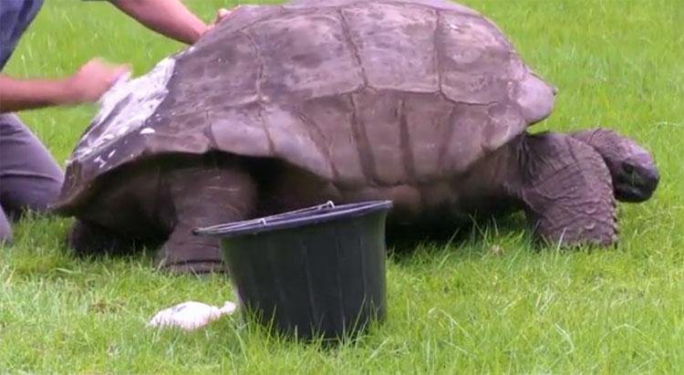 Rùa Jonathan - rùa già nhất thế giới.