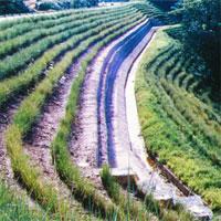 Chống sạt lở đất bằng thảm thực vật